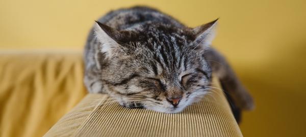 Schlafende Katze auf Sofa