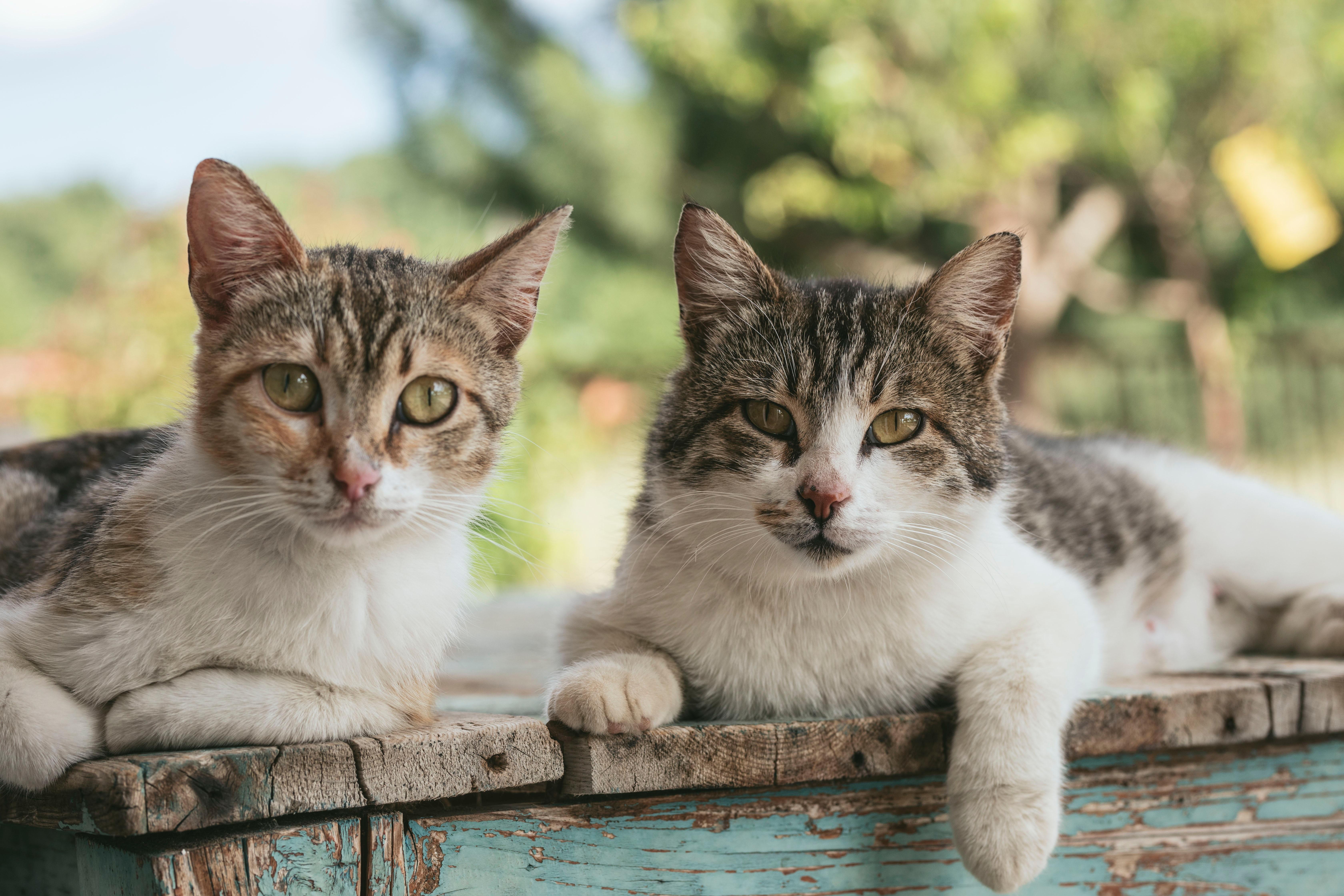 Zwei Katzen blicken in die Kamera
