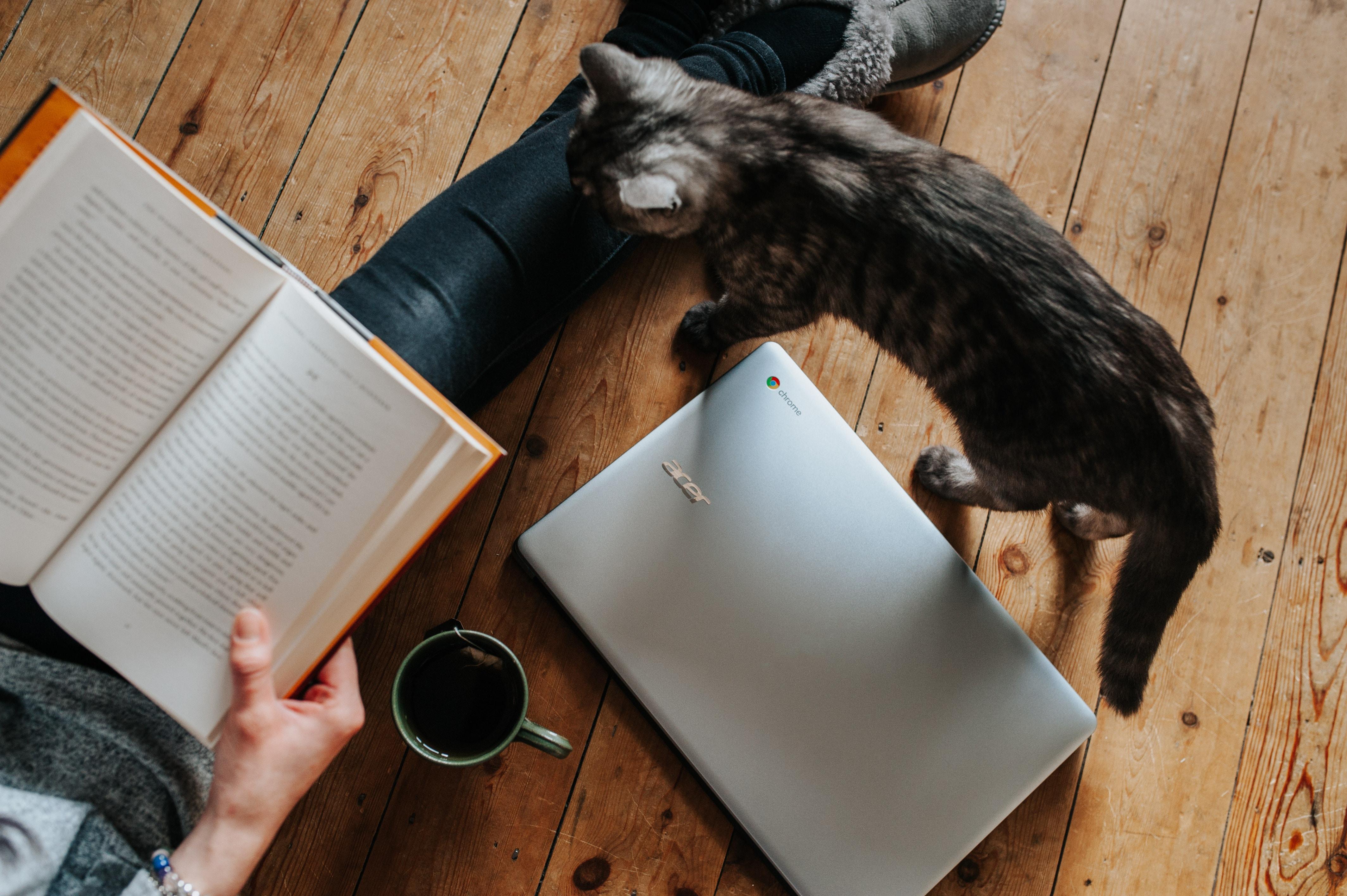 Lesende Person mit Buch, Laptop und Kaffee sitzt auf dem Boden, Katze steht daneben