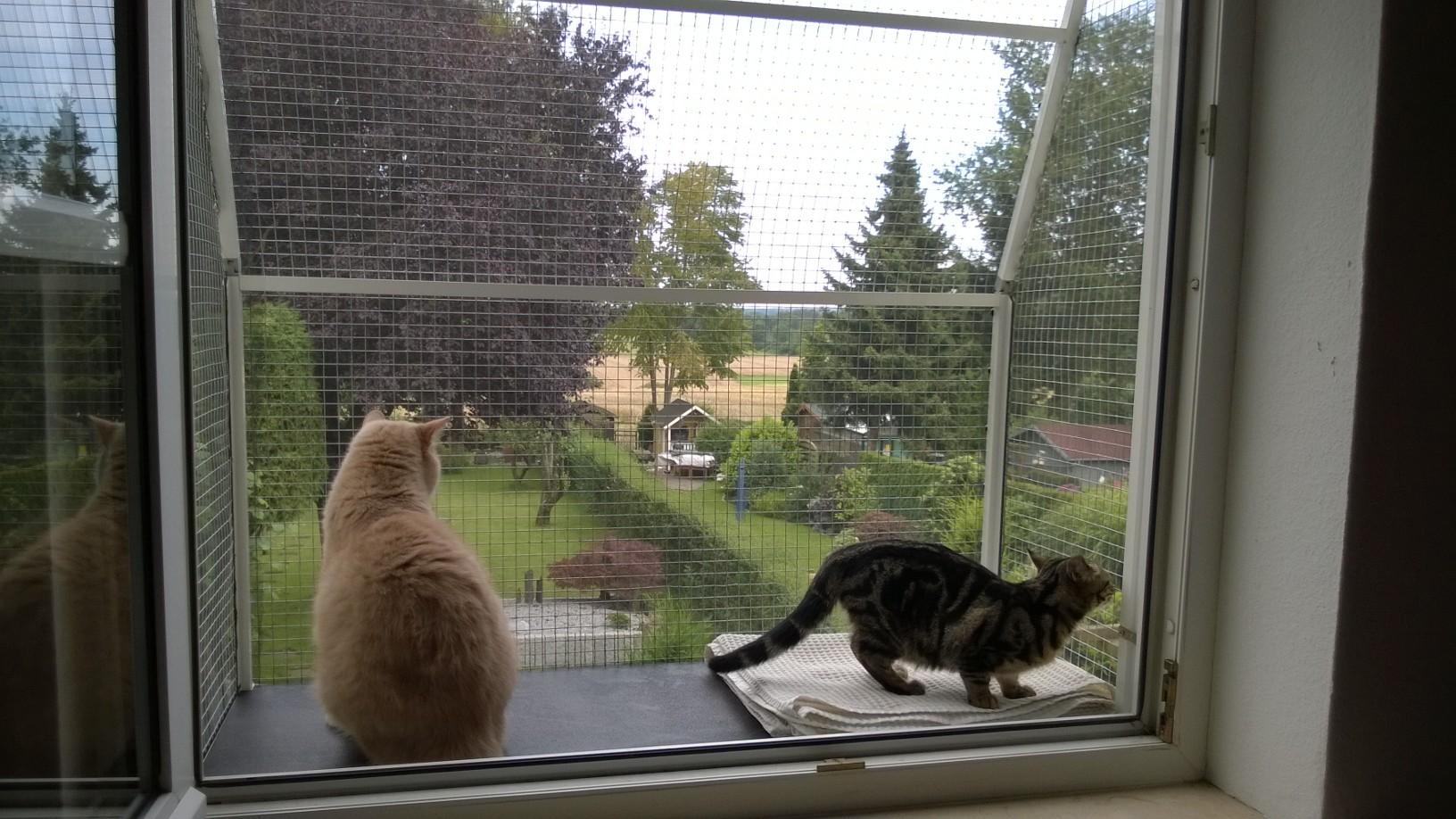 zwei Katzen genießen die Aussicht vom Katzenbalkon