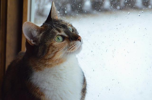 Katze sitzt am Fenster