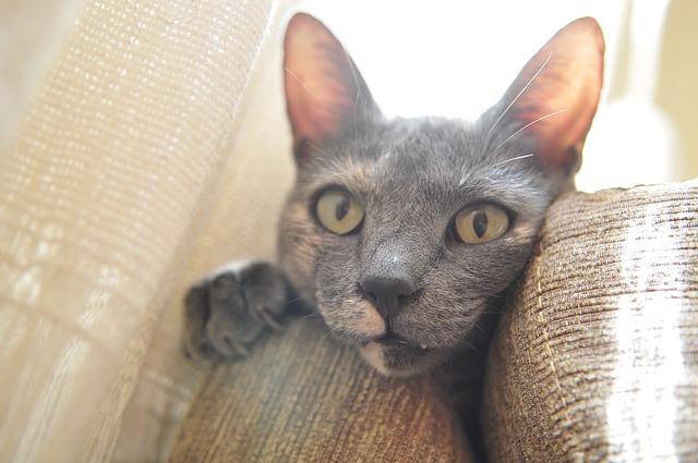 Katze guckt zwischen Sofa vor