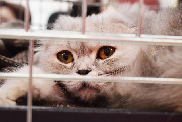 Beige Katze liegt hinter einem Gitter