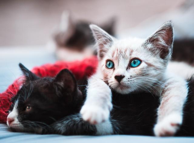 Hellbraune Katze liegt über dunkler Katze