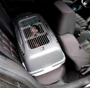 Katze guckt aus Transportbx, die auf der Rückbank befestigt ist