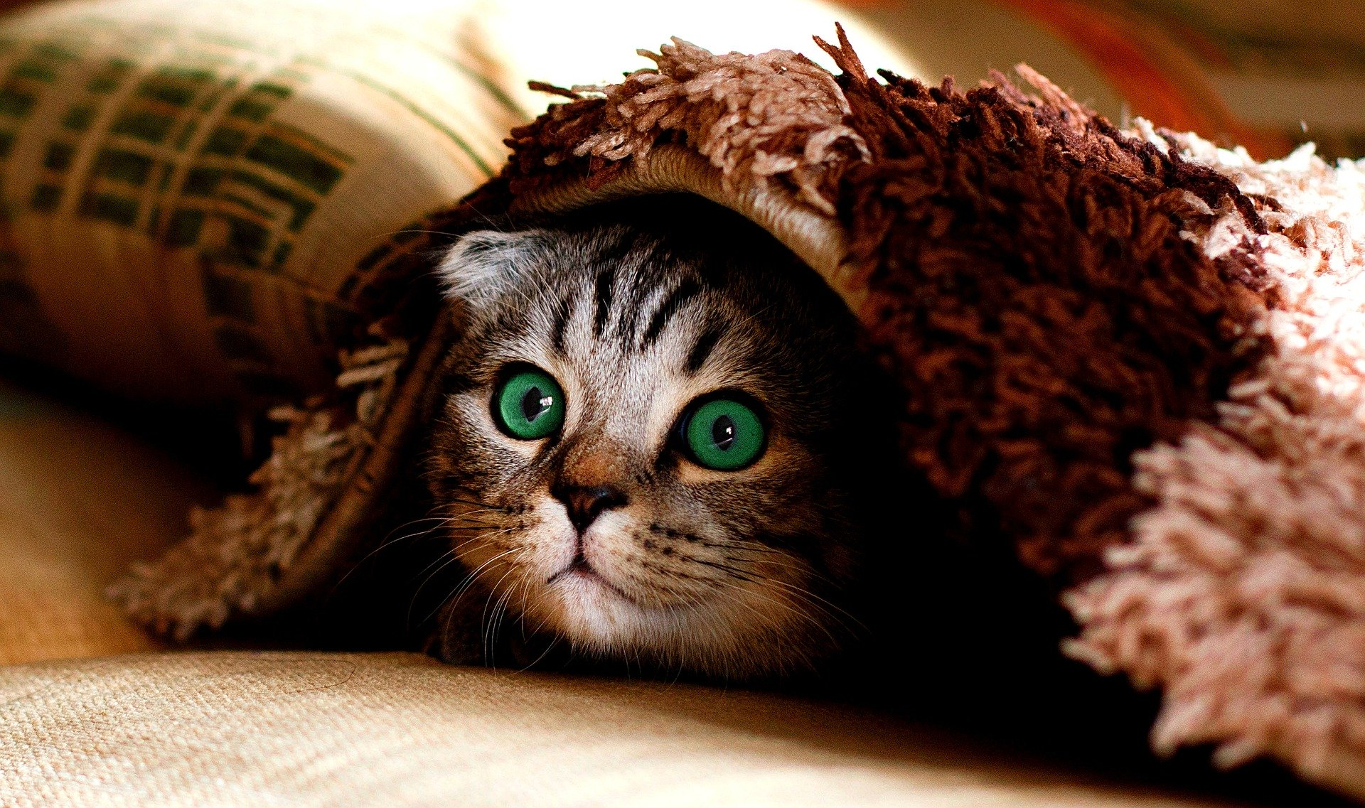 Kätzchen versteckt sich unter der Decke