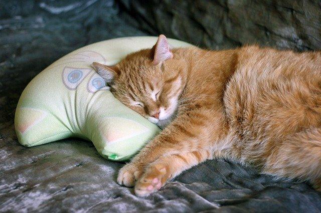 Rote Katze schläft auf Kissen