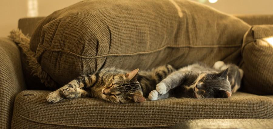 Katzen schalfen auf braunem Sofa