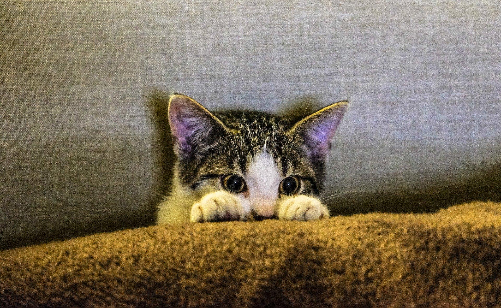 Kleines Kätzchen guckt erschreckt