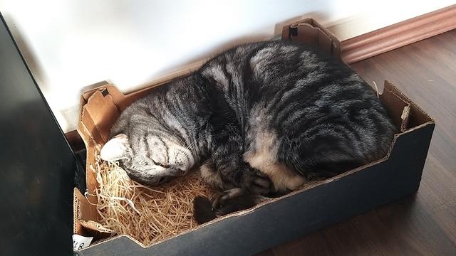 Getigertre Katze im schwarzen Karton