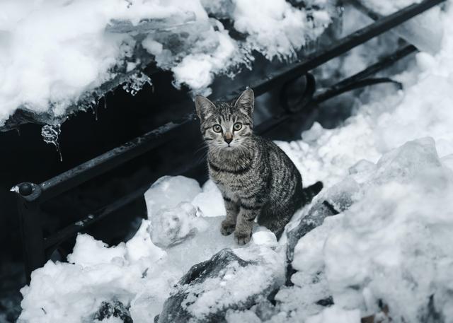 getigerte Katze sitzt im Schnee und guckt in die Kamera